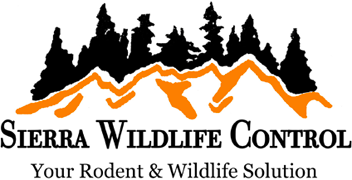 Humane Rodent and Wildlife Solutions in Roseville, CA